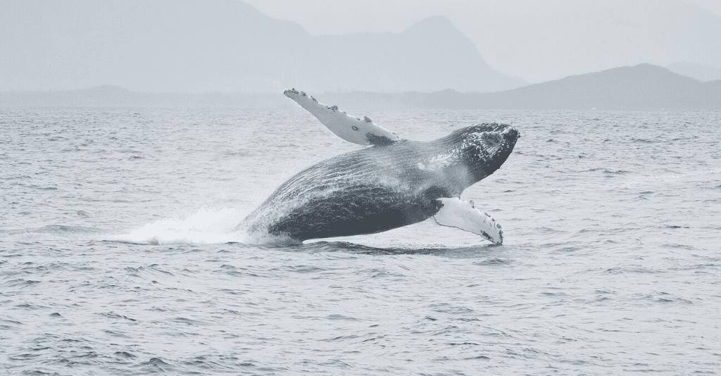 Venue West - Destination Management - Whale Watching